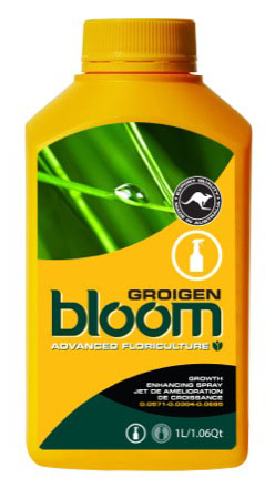 BLOOM  GROIGEN  1 LTR