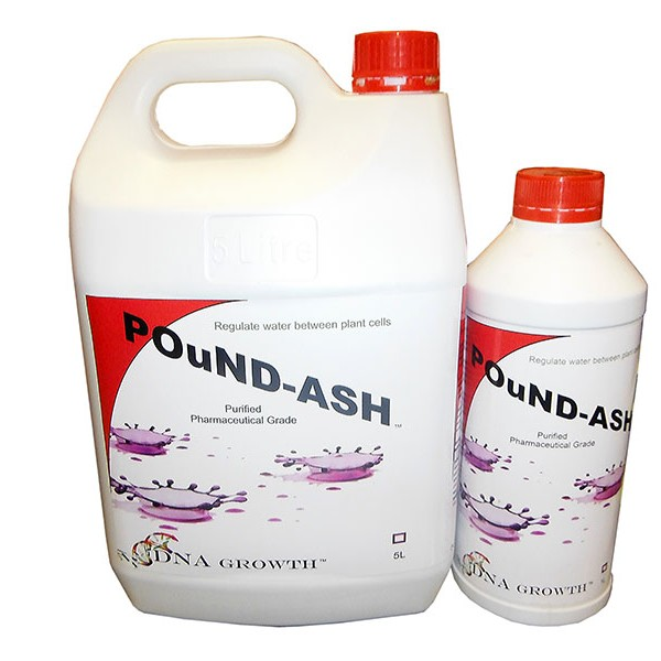 DNA  POUND-ASH  1 LTR